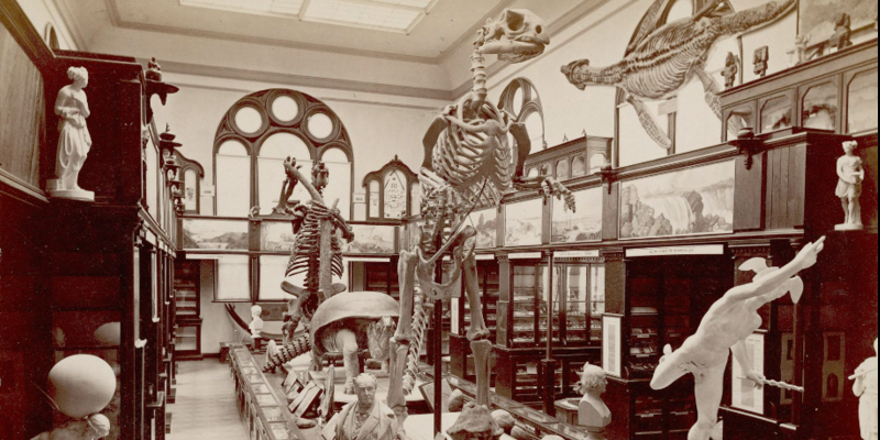 The E. M. Museum of Science at Princeton College, 1886