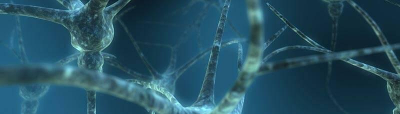 Brain-Neurons_sapientia-banner