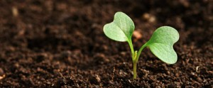 plant-the-seed_300x165