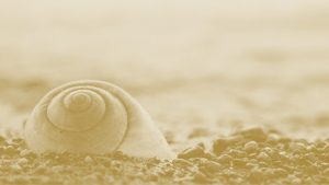 <h1>Intelligent Design as Science or Religion?</h1>Five Scholars Contribute to Sapientia's Latest Areopagite
